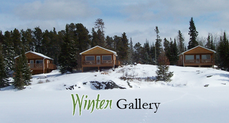 OF Winter Gallery Pic